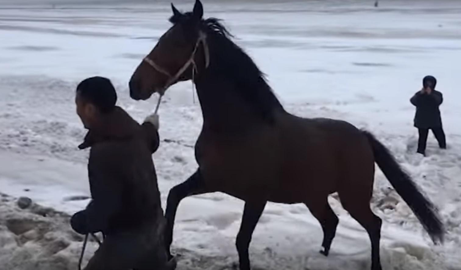 8 часов шла операция по спасению лошадей из перевернувшейся фуры в Самарской области