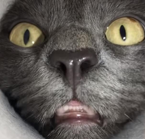 Видео с котом из Сибири стало хитом в интернете