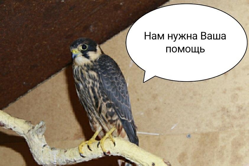 Тольяттинцев просят не бросать в беде уникальный приют для птиц