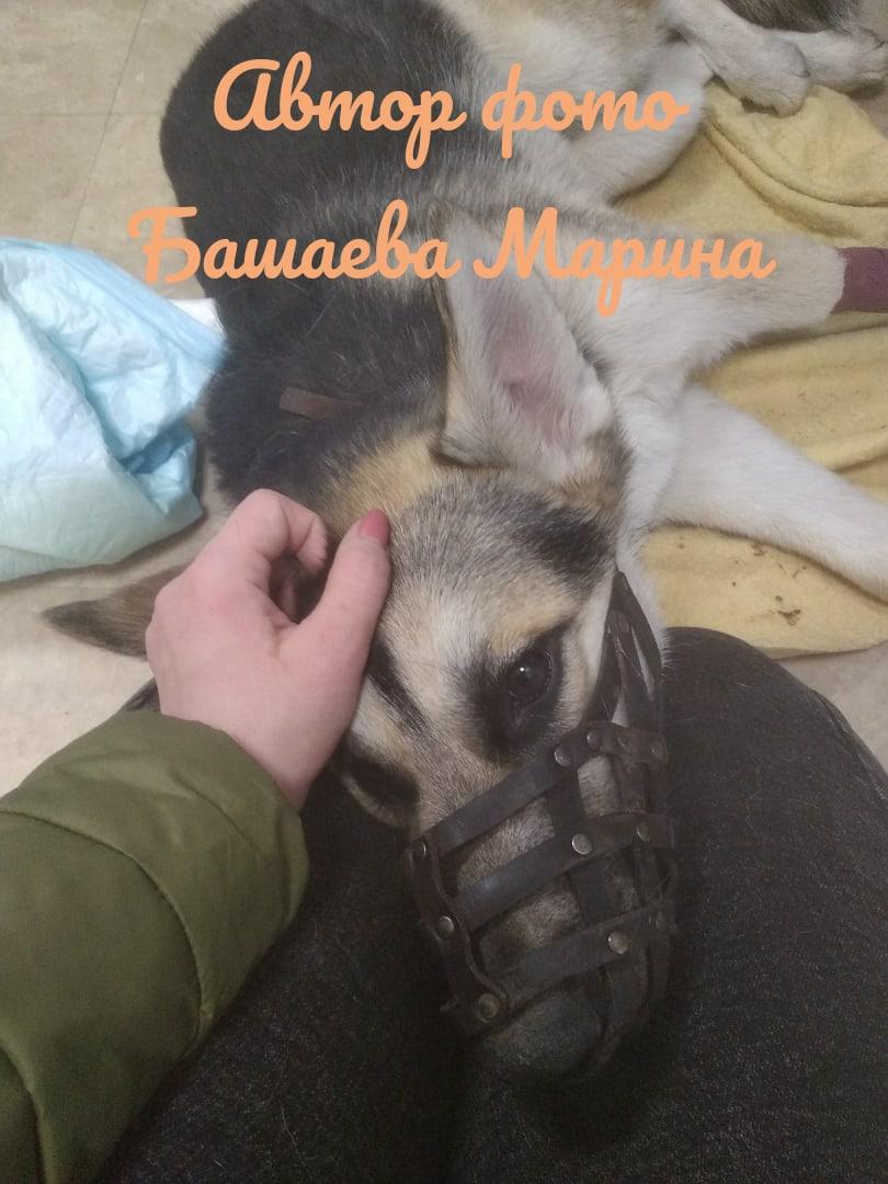 Тольяттинцы собирают средства на сложную операцию собаке, упавшей с 6 этажа