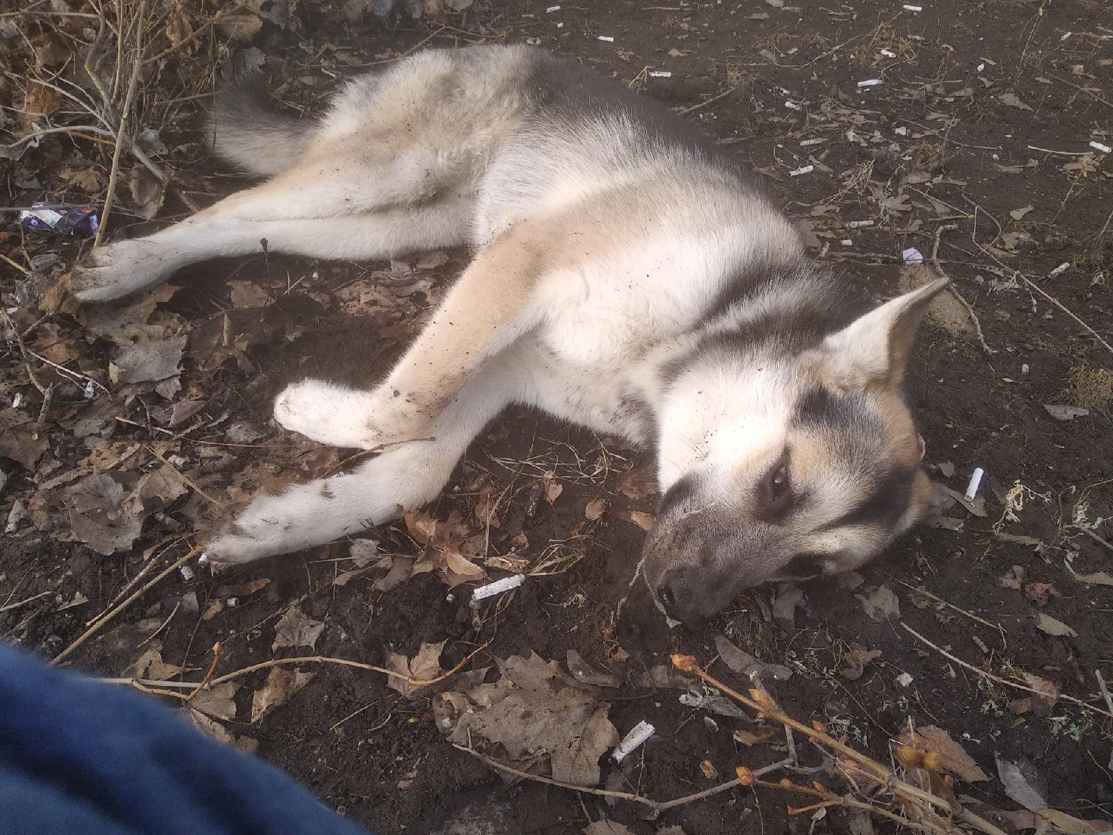 В Тольятти спасают собаку, которая упала с 6 этажа