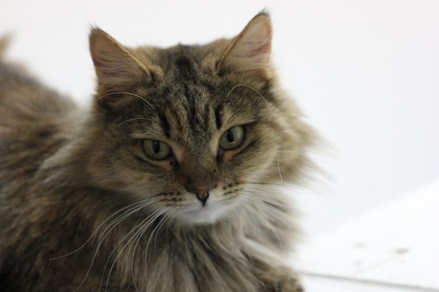Ученые: Кошки мяукают специально для общения с человеком