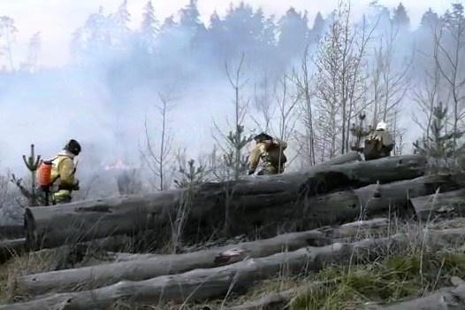 В Тольятти тушили крупный лесной пожар