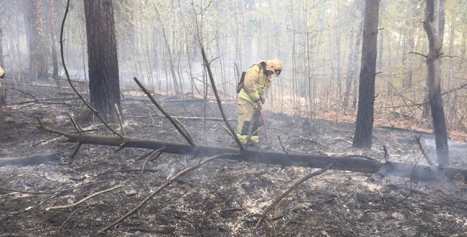 В Тольятти тушили пожар в лесу
