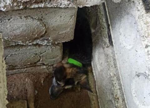 В Тольятти спасали упитанную собаку, застрявшую между плитами