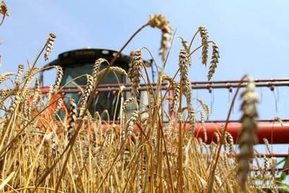 В I квартале Самарская область увеличила экспорт продукции АПК на 20%