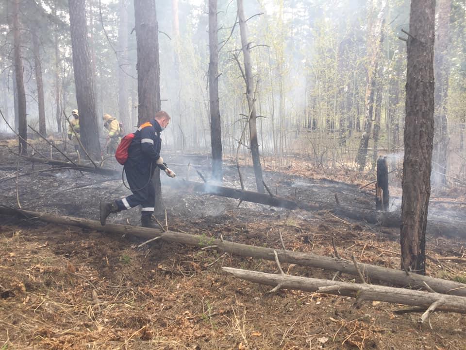 Азаров распорядился охранять тольяттинский лес от минимальных возгораний