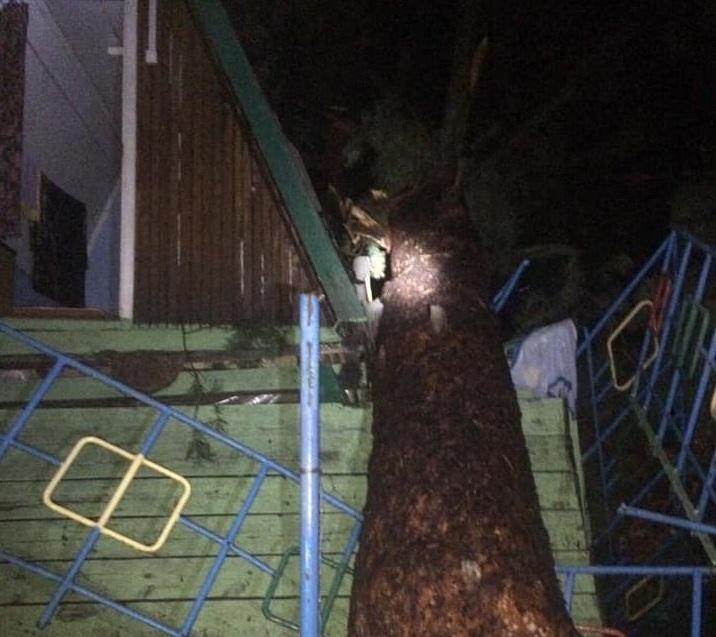В Тольятти дерево упало на домик с людьми