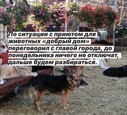 «Будем разбираться»: Дмитрий Азаров о ситуации с тольяттинским приютом для животных