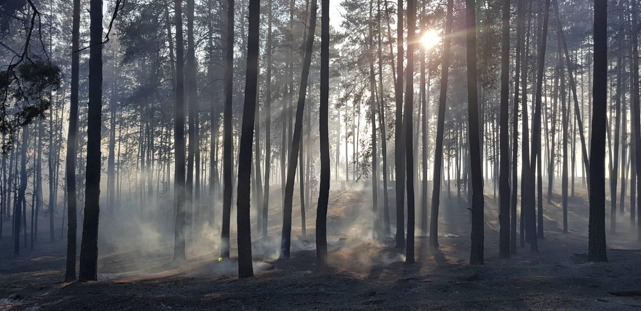 Неизвестный поджег тольяттинский лес