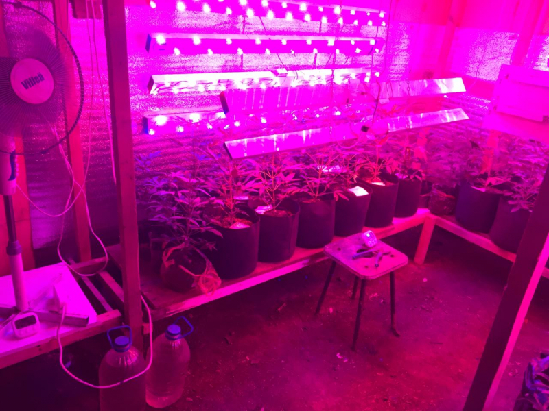 У жителя Самарской области под гаражом нашли плантацию конопли