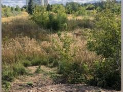 В Тольятти ликвидировали свалку на Ботанической