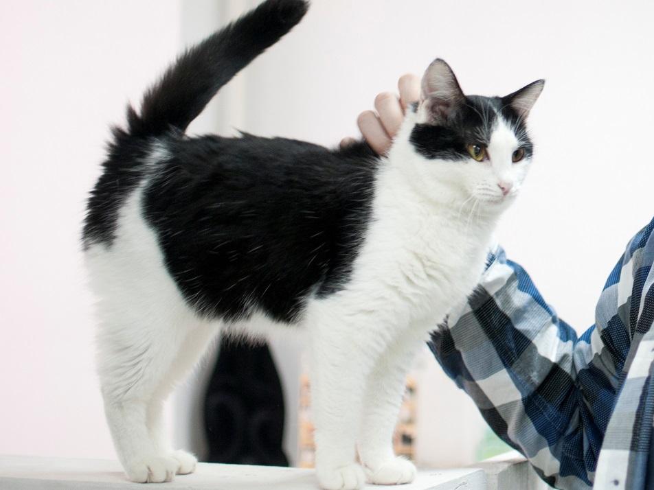Ученые рассекретили прием, который поможет подружиться с кошкой