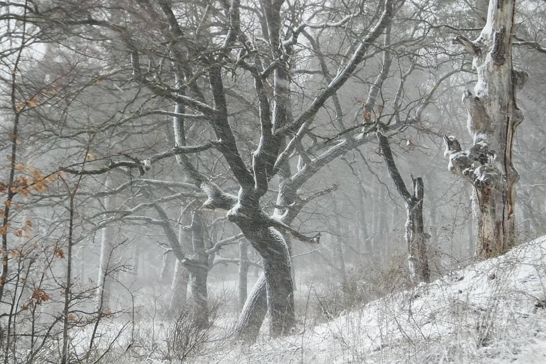 В воздухе Тольятти зафиксировано превышение концентрации аммиака