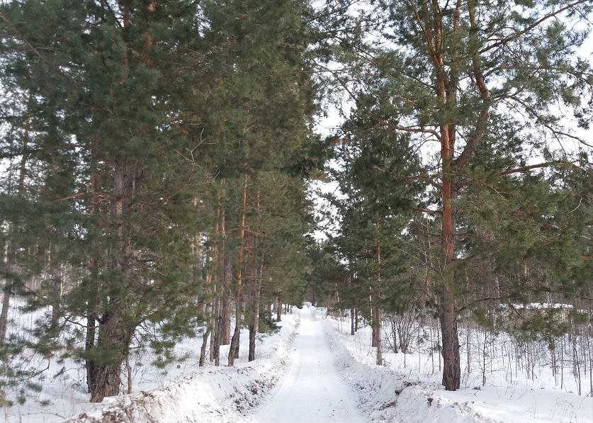 За год на защиту лесов в Тольятти потратили 25 млн рублей