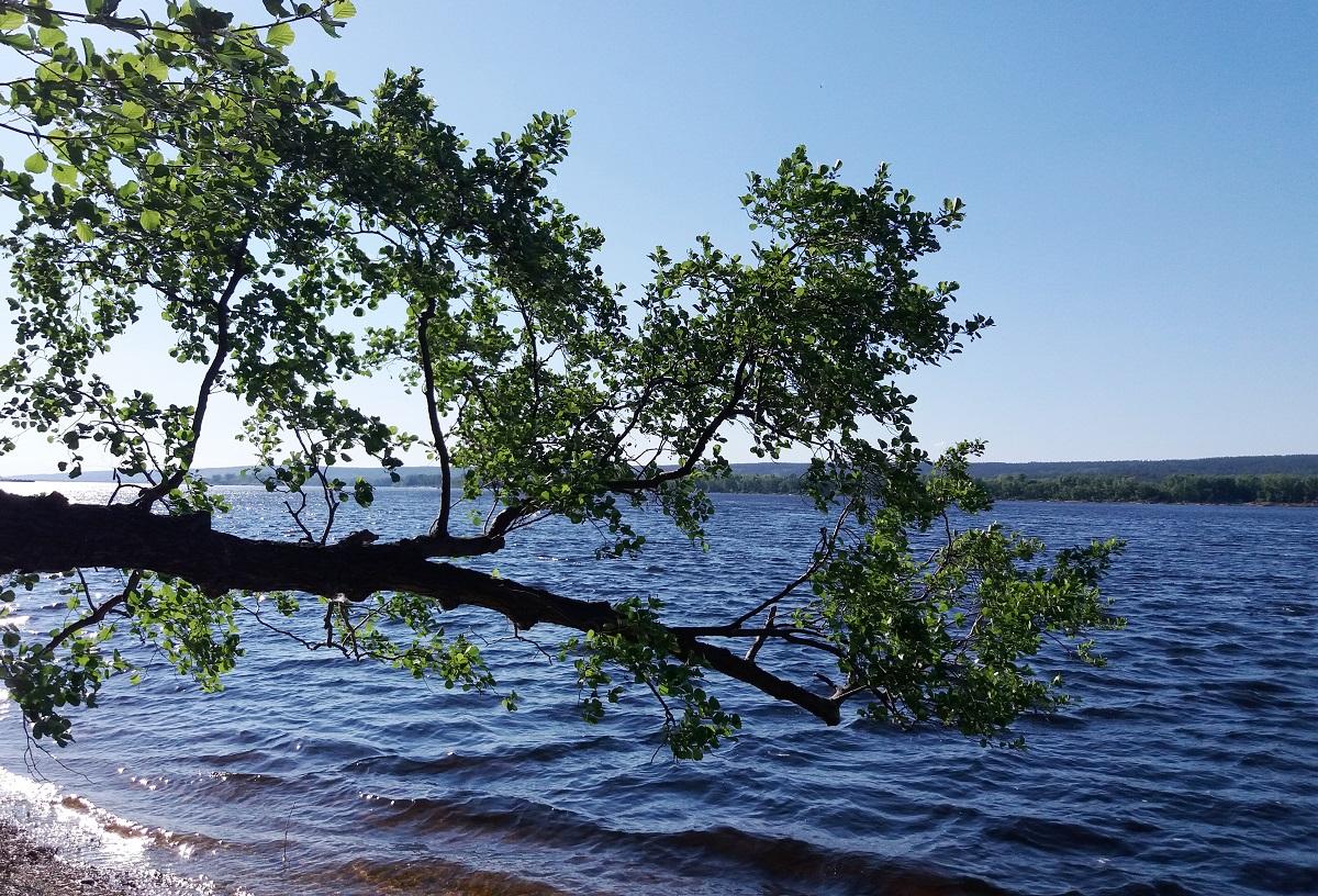 В Самарской области определили самую экологически благополучную реку
