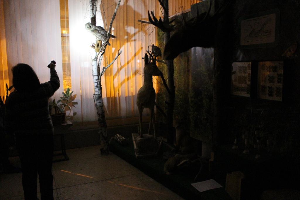 Экскурсия с фонариками «Прогулка по ночному лесу»